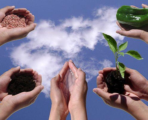 نهاده ها و افزودنی های مجاز در کشاورزی ارگانیک