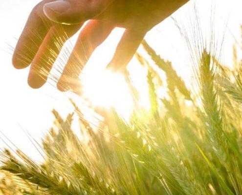 زراعت، تولید ارگانیک