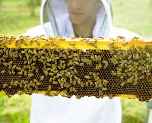 تولید عسل ارگانیک
