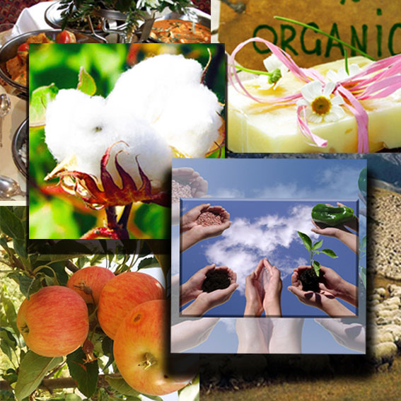 دامنه های صدور گواهی ارگانیک